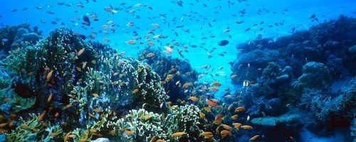 Scuba Diver Proposal Idea