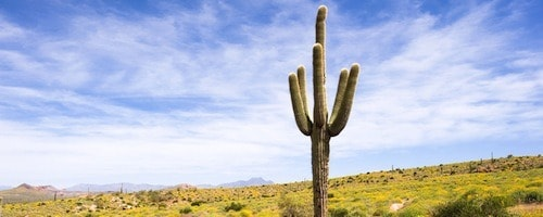 photo-tour-proposal-phoenix-500x200