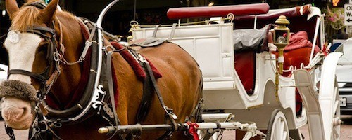 horse drawn carriage proposal idea